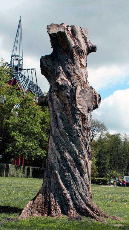 Baum, an einem Ort mit hoher geopathischer Belastung
